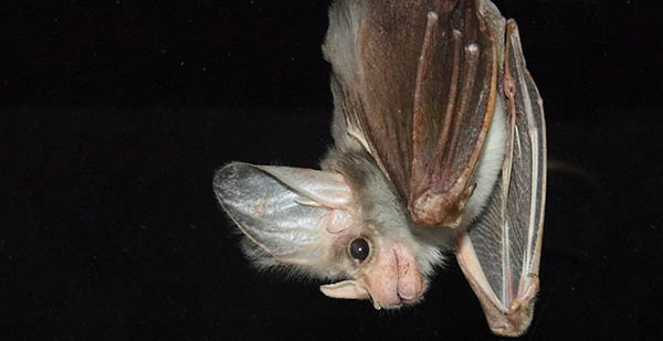 this bat is upside down