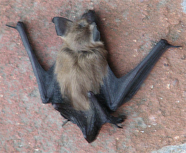a bat in your house has its own specific spiritual meaning