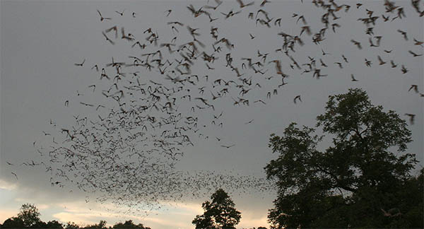 Because both bats and birds fly they convey a similar message of freedom