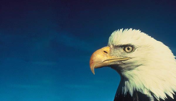 dead eagle spiritual meaning