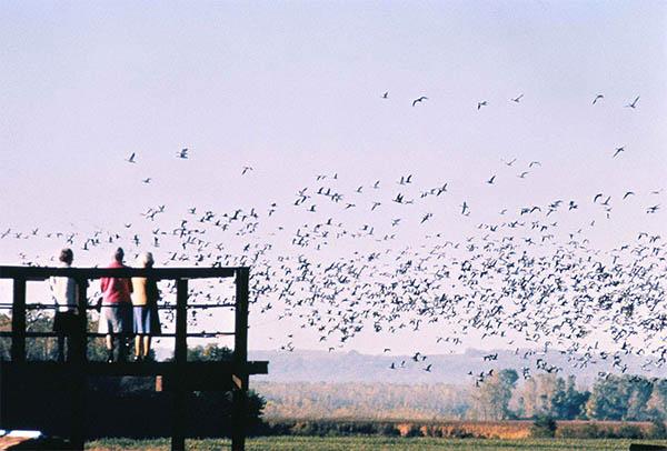 flock of birds a powerful symbol for freedom