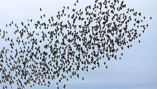 a flock of birds symbolizing freedom