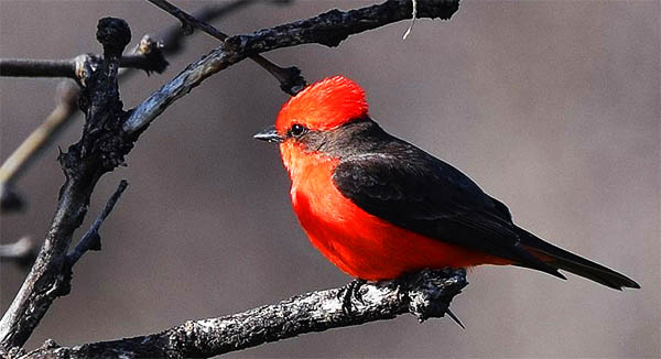 red feathers spiritual meaning