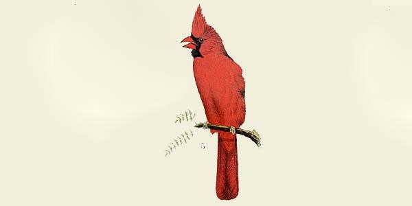cardinal spiritual meaning