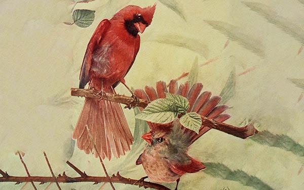 public domain cardinals artwork