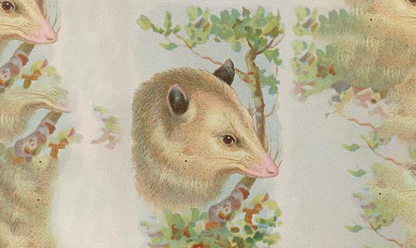 possum opossum spirituality