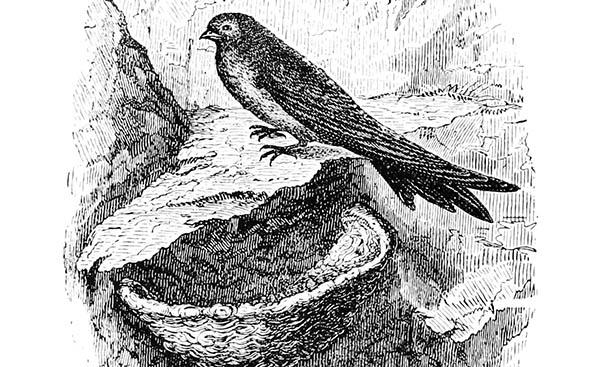 bird swallow nest spiritual meaning