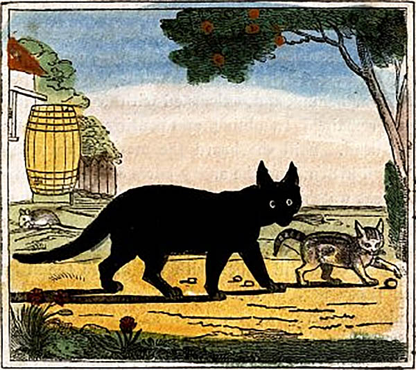 in ireland black cats are thought to be good luck