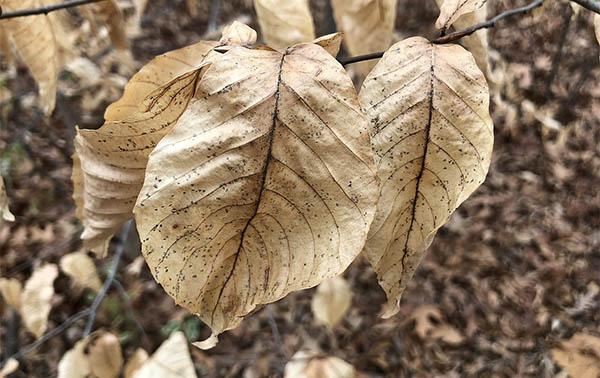dead leaf spiritual meaning