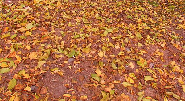 yellow autumn leaves spiritual meaning omen symbolism