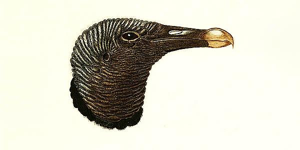 black vulture spiritual meaning