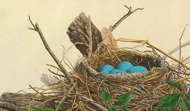 starling blue eggs meaning