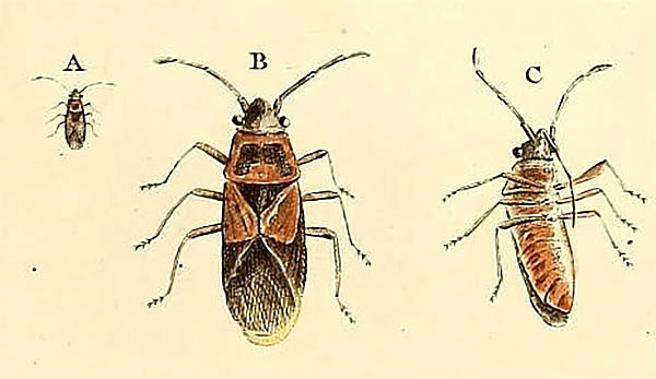 elm seed bug symbolism omens spiritual meaning