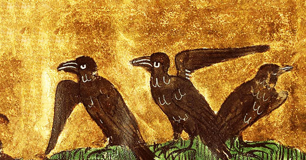 spiritual meaning starling
